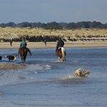 Horses on beach .