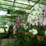 Orchid cool house