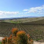 Foto de Callaway Vineyard & Winery