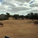 Monarto Zoo – fénykép