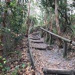 Koala Reserve Mangrove Boardwalk