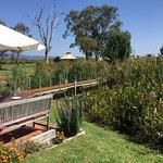 Bild från di Lusso Estate Winery