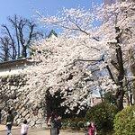 Photo of Toyama Castle