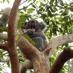 Taronga Zoo – fénykép