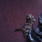 Lovely hotel cat 4
