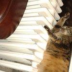 Lovely hotel cat