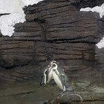 صورة فوتوغرافية لـ Fakieh Aquarium