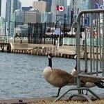 Photo of Toronto Islands Ferries