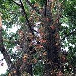 ภาพถ่ายของ Doi Suthep-Pui National Park
