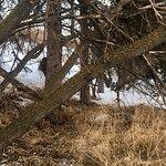 Foto de Parque Provincial Fish Creek