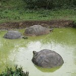 Tortoises in a pond