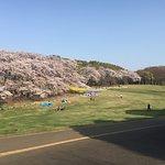Negishi Shinrin Park照片