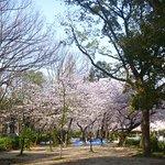 ภาพถ่ายของ Utsubo Park