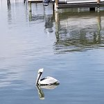 One of many pelicans who hang out by the docks at JB's Fish Camp