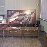 Photo of Museo Geologico Giovanni Capellini