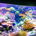 Malmö acquarium - Tropical waters