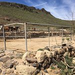 Photo of Horse Riding Adventures in Tenerife
