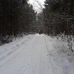 Лес рядом с пансионатом