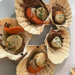 roasted scallops in shells