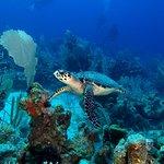 Photo de Belize Diving Services