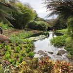 Photo of Trebah Garden