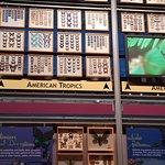 Florida Museum of Natural History