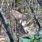 """White tail deer At the summit """"mind over matter"""""""