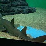 Foto de Shanghai Ocean Aquarium