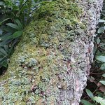 lots of mosses