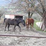 Agriturismo Rivoli Photo