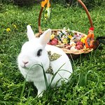 Our little Easter bunny🐇❤️