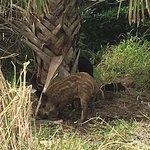 Merritt Island National Wildlife Refuge Foto