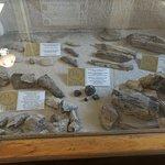Museo La Leona