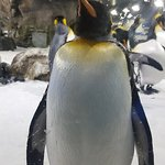 Getting close to the penguins