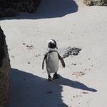 Boulders Beach Penguin Colony – fénykép