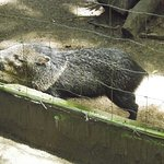 Photo de Tree of Life Wildlife Rescue Center and Botanical Gardens