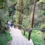 Steps to Erskine Falls