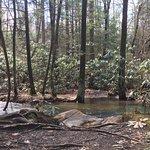 Фотография West Virginia Botanic Garden