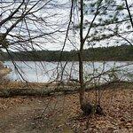 Walden Pond State Reservation Foto