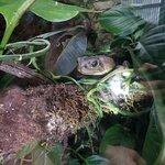 Photo de Monteverde Frog Pond