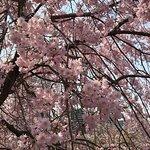 Foto de Ojima Komatsugawa Park