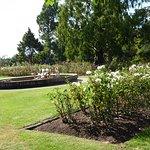 Te Awamutu Rose Gardens