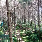 Φωτογραφία: Adventure Forest