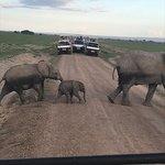 Elephant crossing, Amboseli
