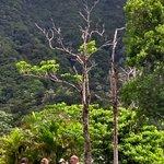 Foto de Raro Mountain Safari Tour