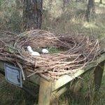 nid decoratif en fin du parcours
