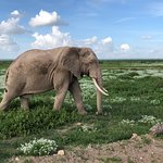 Photo of Amboseli National Park
