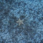 more cool starfish