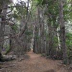 Foto de Bosque de Los Arrayanes