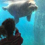 SeaWorld – fénykép